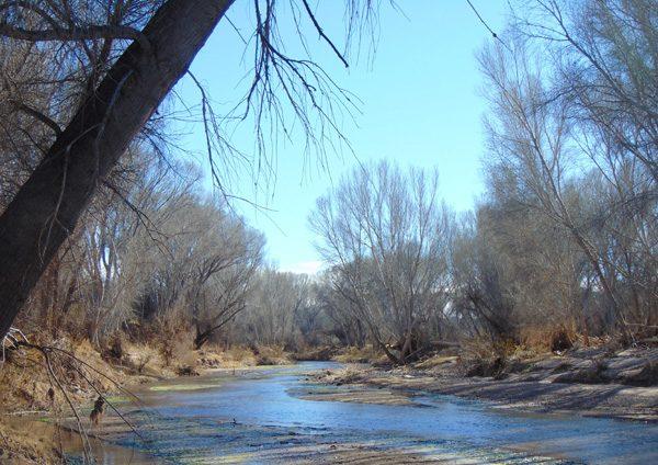 San_Pedro_River_Little_Boquillas_Ranch_Arizona_2015-resize