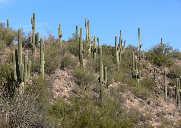 Sonoran_Desert_N_of_Phx_AZ_40951resized