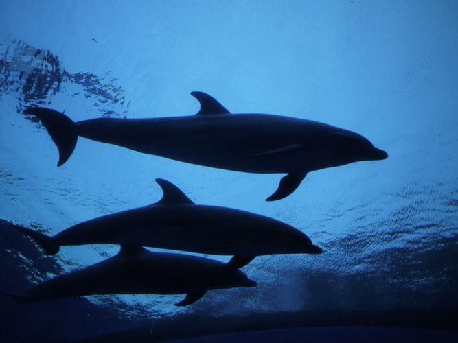 Dolphins by Hiro Kitaoka on Unsplash.