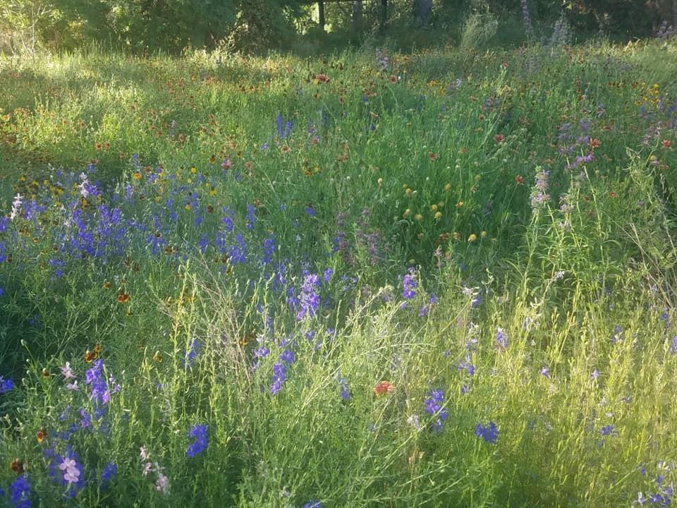 Paton Center Meadow_Kari Hackney
