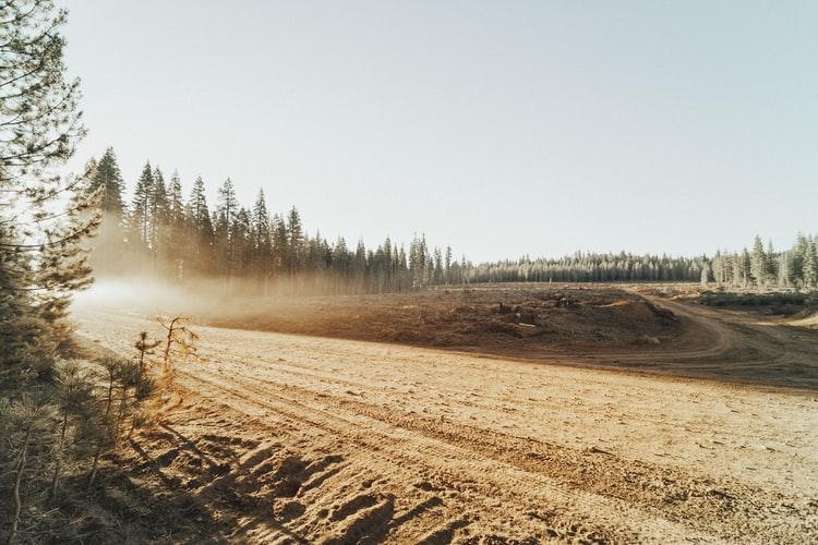 Deforestation by Roya Ann Miller on Unsplash
