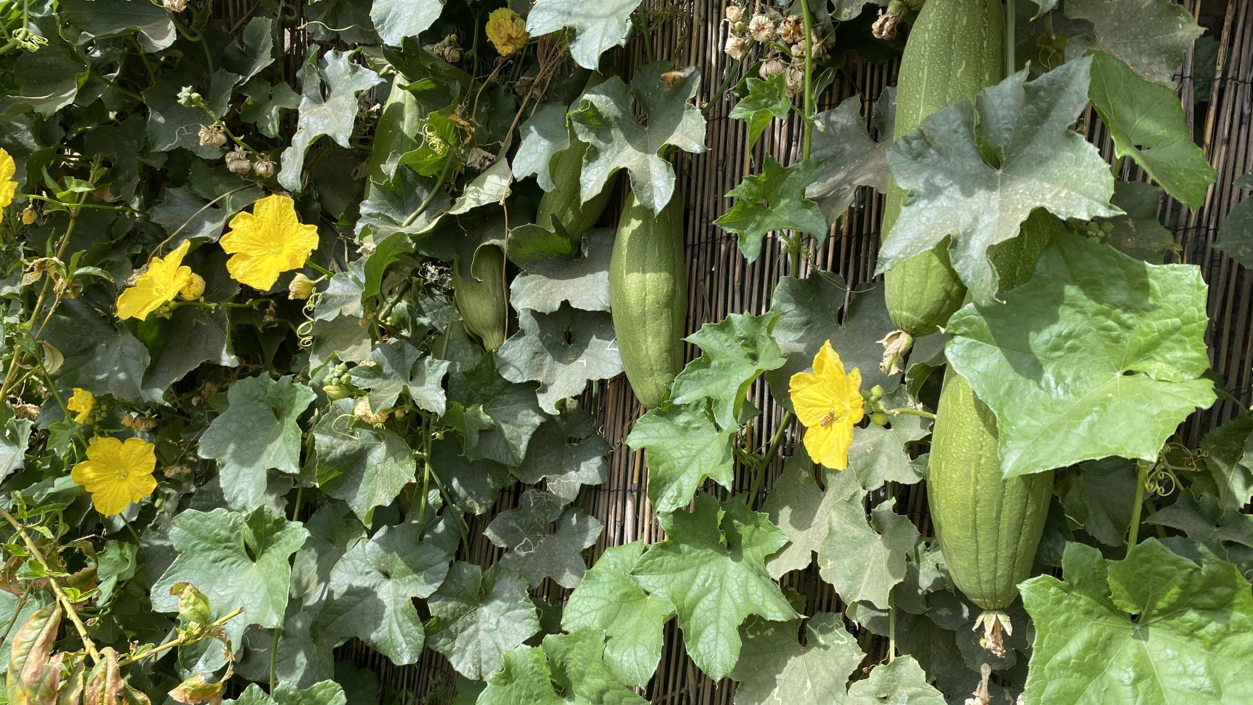 clark-park-community-garden's