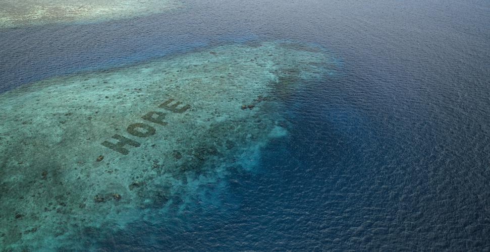 Kate-walsh-hope-reef-sheba