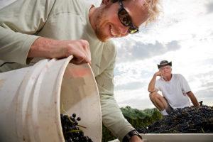 James Callahan, Sam Pillsbury and Shiraz Grapes
