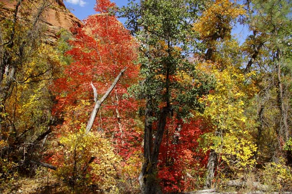 Sedona Fall Colors by John Menard_small